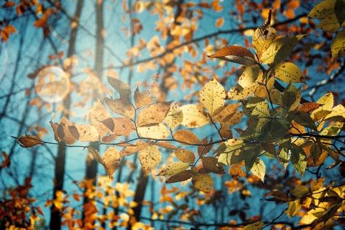 Leaves upwards2
